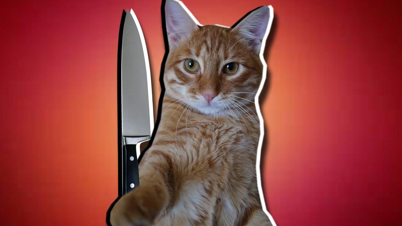 Кот по кличке Тигр