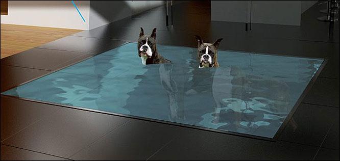 Жильцы Really Modern Doghouse