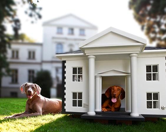 Mansion Doghouse и его обитатели