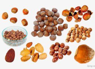 Самый дорогой в мире орех и его конкуренты