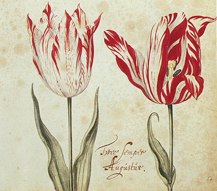 Книги Тюльпанов