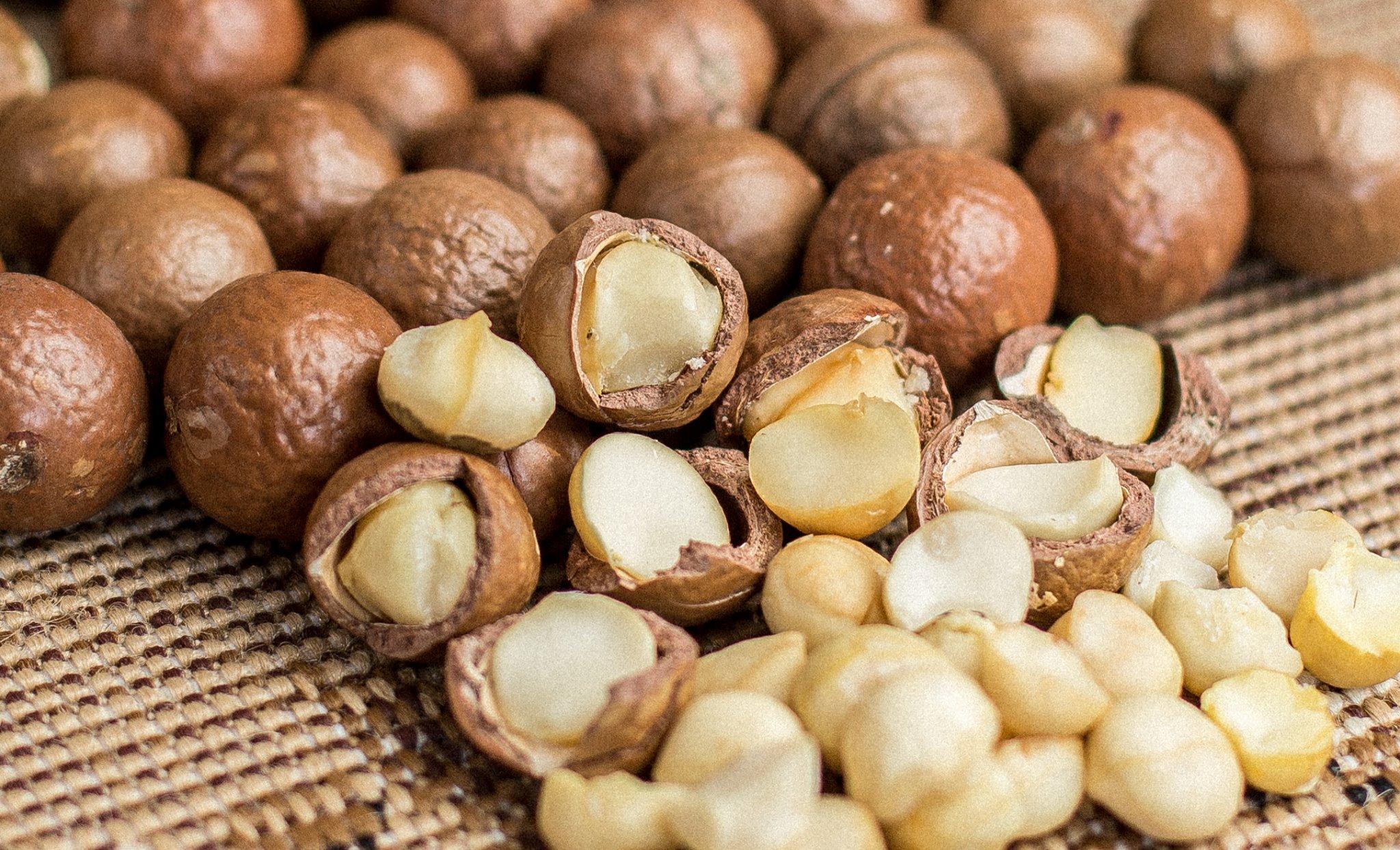 картинки макадамского ореха настоящее время