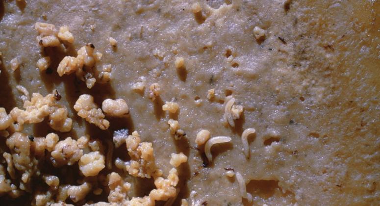 Хлеб с сыром Casu Marzu