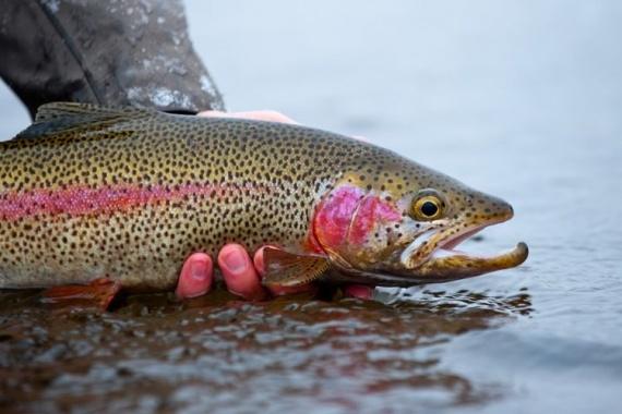Самая дорогая икра рыбы в мире: разновидности, цены